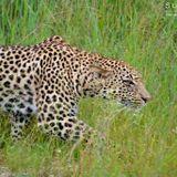 Zululand And Maputaland Wildlife And Birding Tour